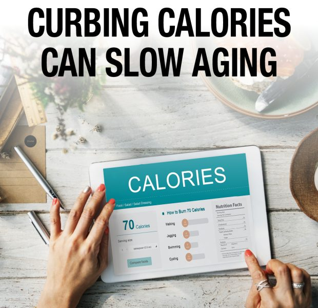 Curbing calories can slow aging