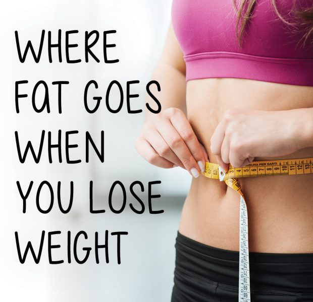 Where fat goes when you lose weight