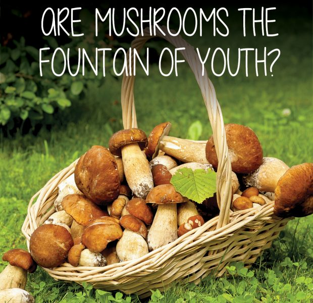 Mushrooms fountain of youth