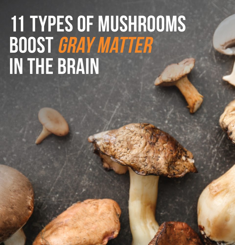 Mushrooms Boost Gray Matter